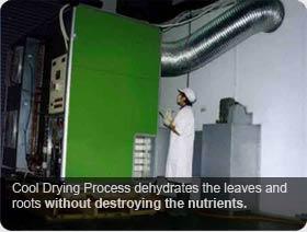 Wheatgrass Cool Drying Process